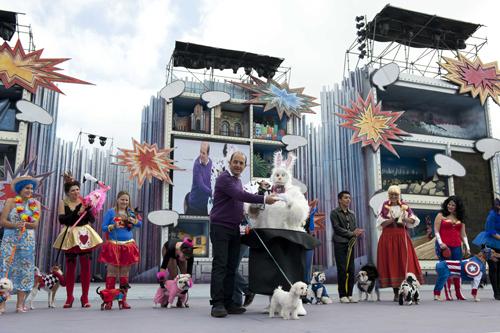 El perro de raza chihuahua de nombre Bambi ha sido ganador del Carnaval Canino
