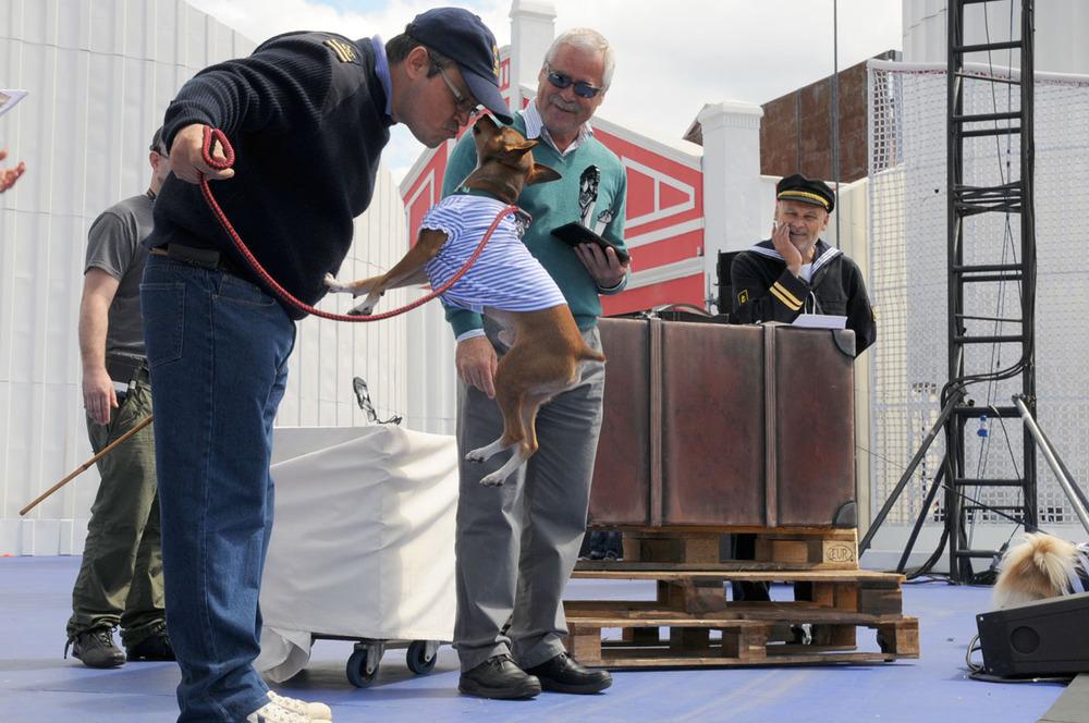 Actitud, simpatía y originalidad, distinciones del Carnaval canino