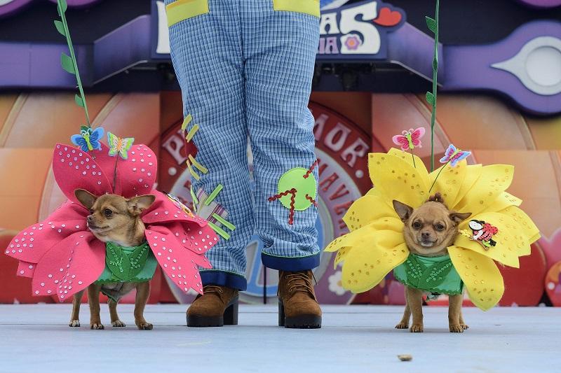 Carnaval canino y el Carnaval de día en Santa Catalina animan la mañana del domingo