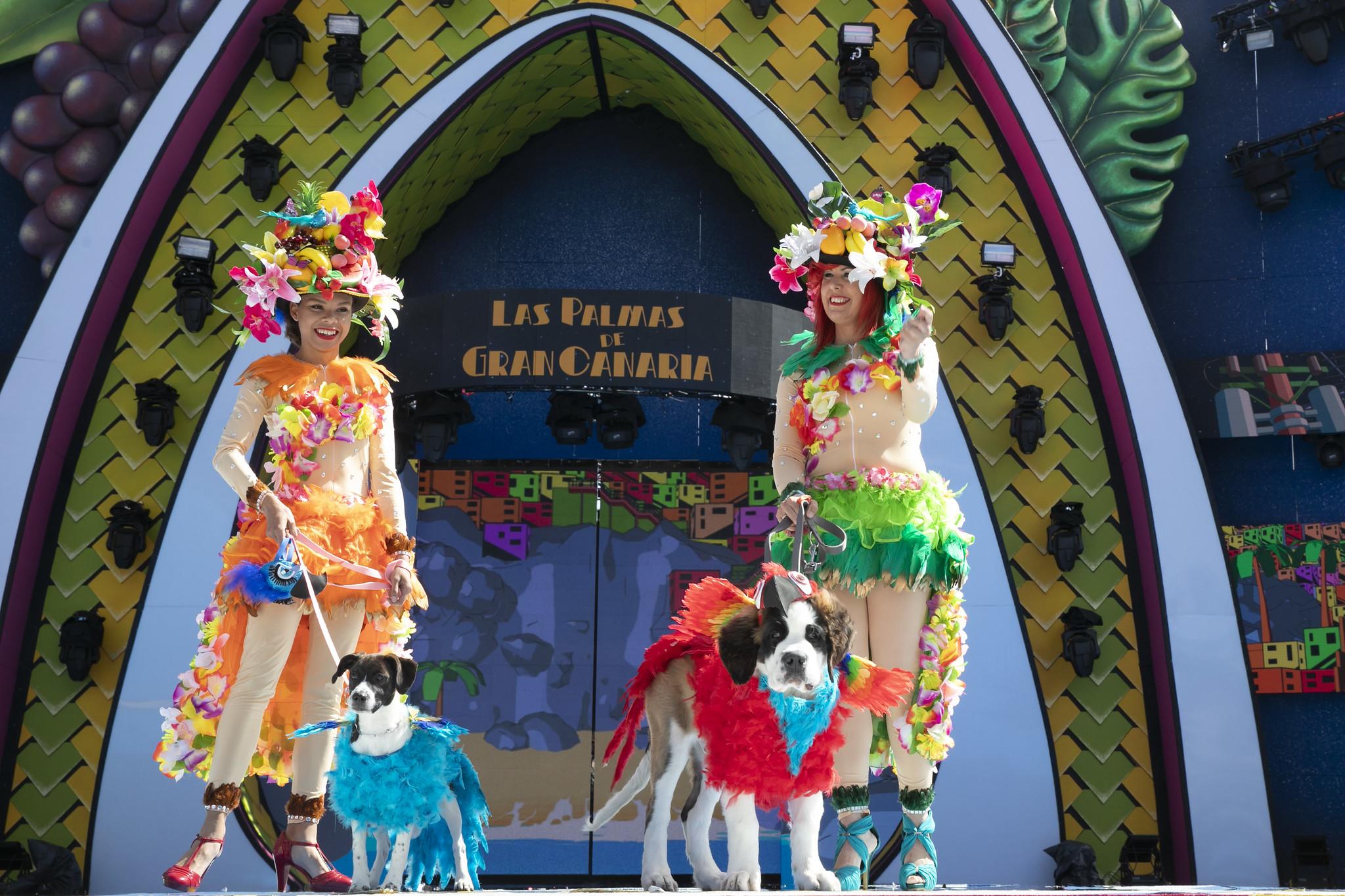 Laufsteg frei für Hunde beim Karneval von Las Palmas de Gran Canaria