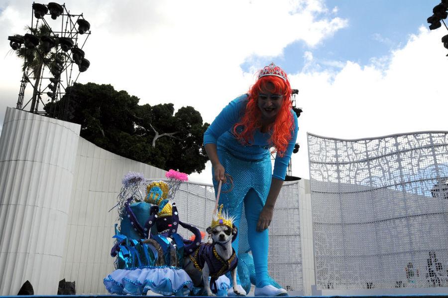 2011 - MAR Y CULTURAS